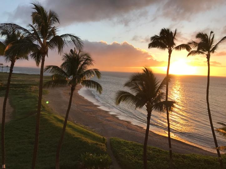 HAwaii palm trees image